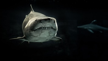 selective-photo-of-gray-shark-200